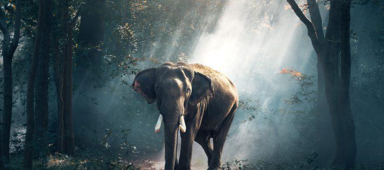 elephant-1822636