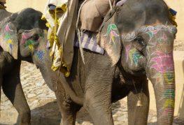 elephant-506314