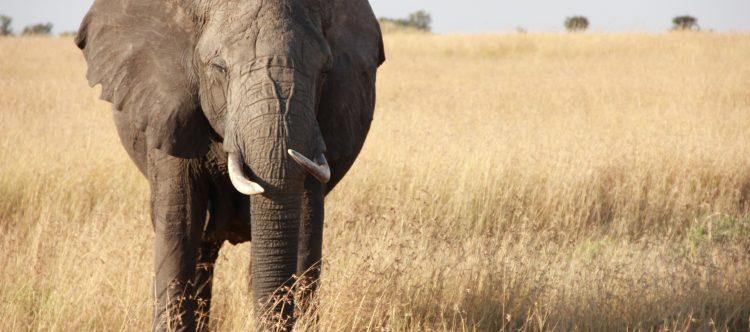 elephant-879959