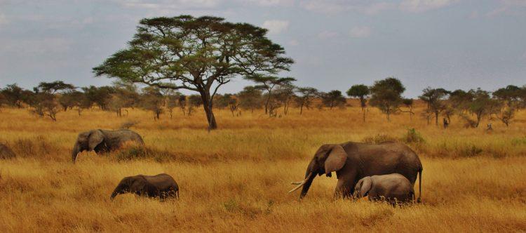 elephants-277329
