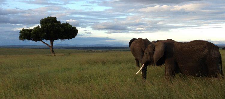 elephants-501878