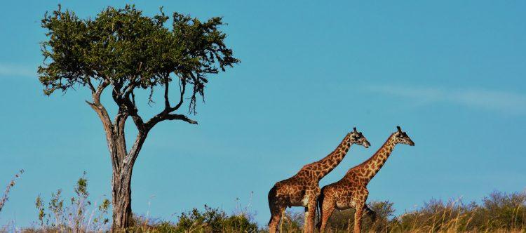 wildlife-1536582