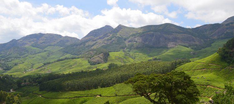 Munnar plantación de té