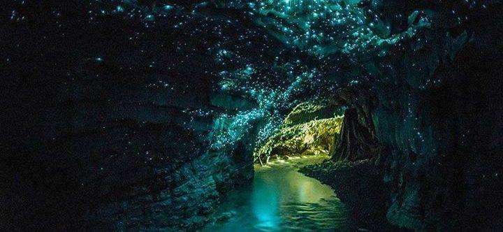 Caverna de luciérnagas luminosas, Waitomo