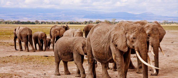 elephants-458990