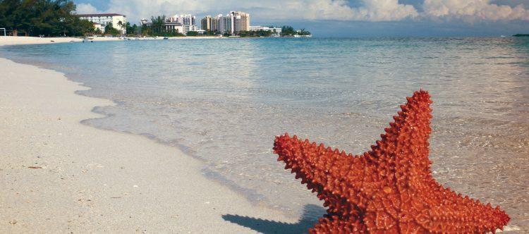 starfish-1122849