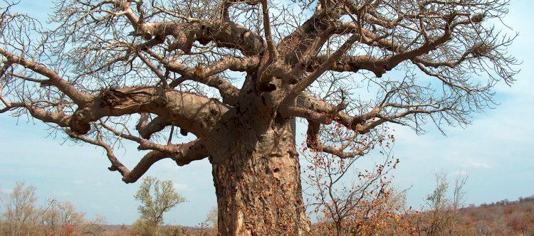 tree-1491652